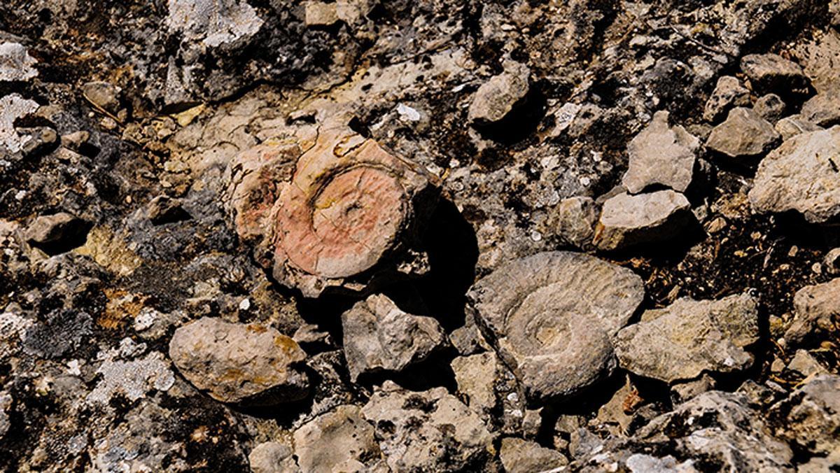 65-200 milyon yıllık Ammonit fosilleri keşfedildi