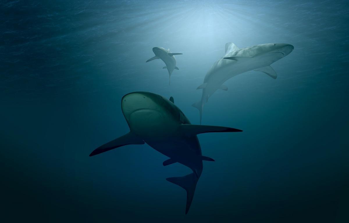 Koronavirüs aşısı için binlerce köpekbalığı öldürülebilir