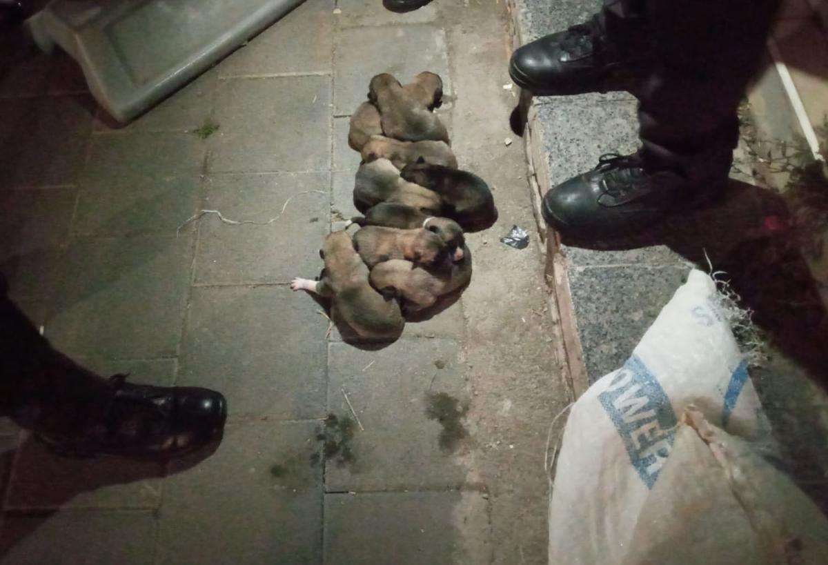 Yavru köpekler çuval içerisinde sokağa atıldı