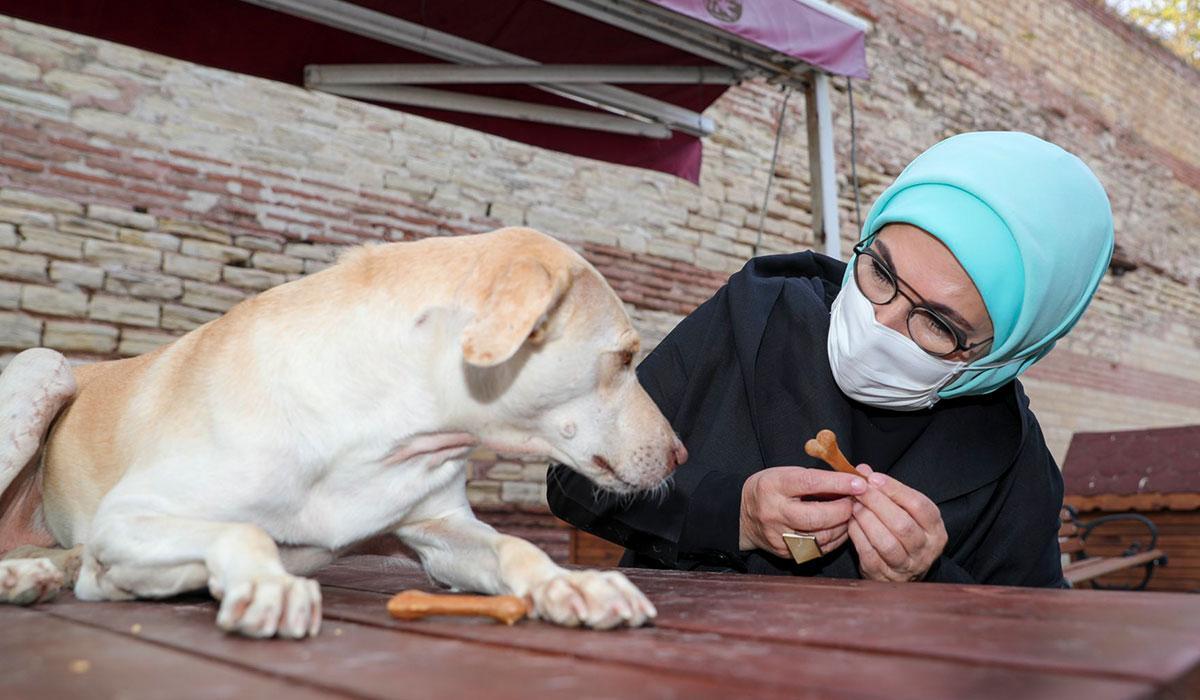 Engelli köpek 'Leblebi'yi sahiplendi, barınağa ilgi arttı