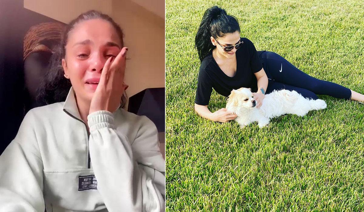 Gözyaşları içinde kayıp köpeğini arıyor