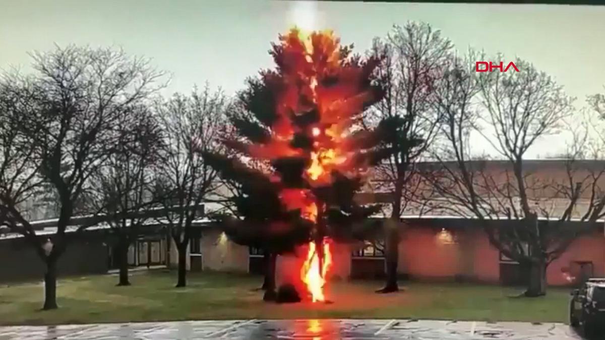 Yıldırımın vurduğu ağaç saniyeler içerisinde ikiye ayrıldı