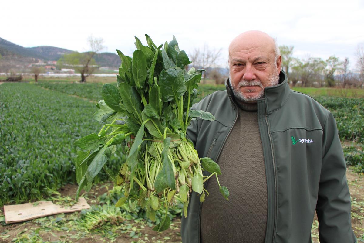 Ispanaklarını satamayan çiftçi çağrı yaptı: Benim ıspanağımı da satın alıp halka dağıtsınlar